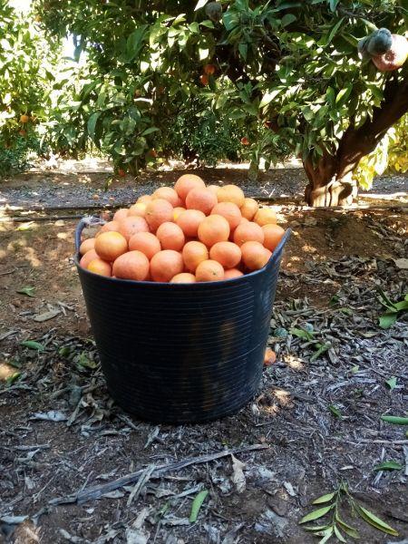 Agricultura spania -2