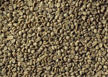 Cafea Verde BURUNDI North 19/20, Arabica 100%