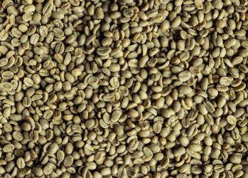 CAFEA VERDE ETIOPIA Sidamo 19/20, Arabica 100%
