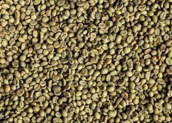 Cafea Verde GUATEMALA San Marcos ROBUSTA 19/20, ROBUSTA
