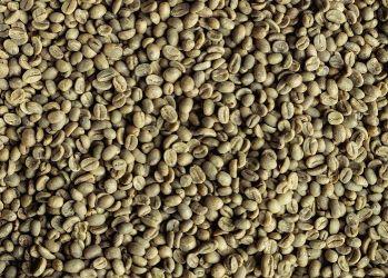 Cafea Verde NICARAGUA Jinotega 19/20, Arabica 100%