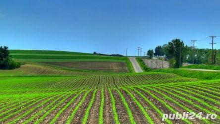 Dau in arenda teren agricol suceava 550 hectare cu utilaje aferente