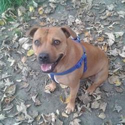 Dog-walker / Plimb câini 20 lei / ora