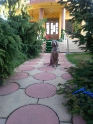 Dresaj canin in Constanta