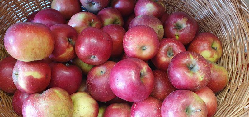 Magazin alimentar cu livrare in Sibiu fructe legume paine lactate etc-6