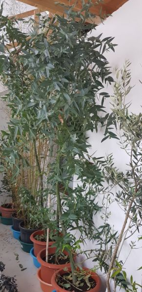Plante flori ornamentale cautam distribuitori pentru produsele noastre-11