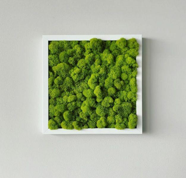 Tablou licheni verde deschis-1