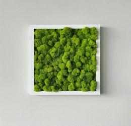 Tablou licheni verde deschis