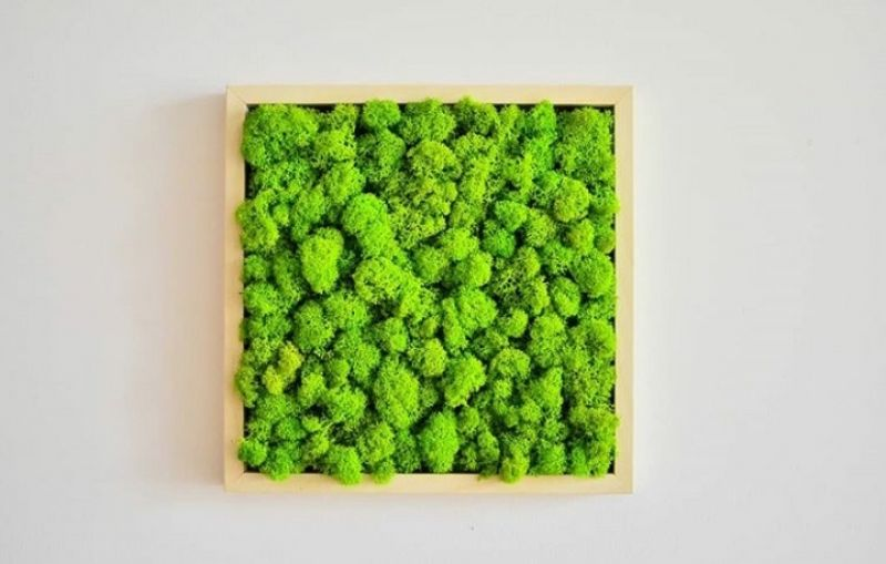 Tablou licheni verde deschis-3