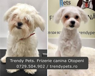 Trendy Pets. Frizerie si cosmetica canina Otopeni