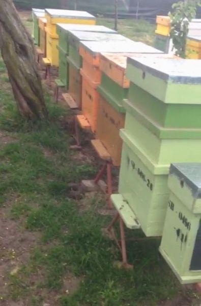Vand stupina formata din 48 de familii de albine-1