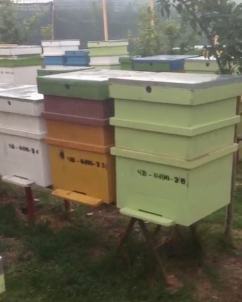 Vand stupina formata din 48 de familii de albine-2
