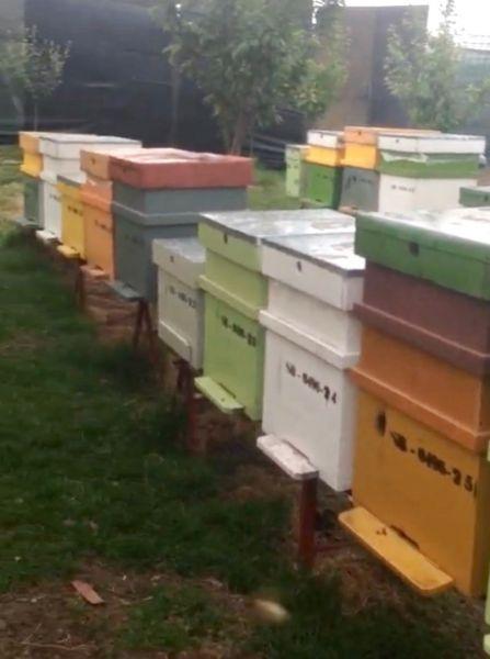 Vand stupina formata din 48 de familii de albine-3