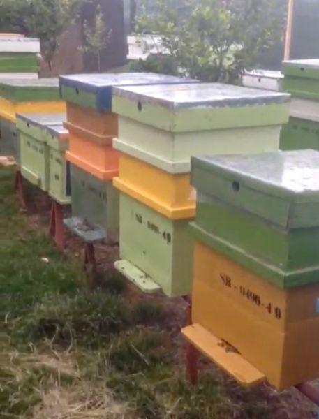 Vand stupina formata din 48 de familii de albine-4