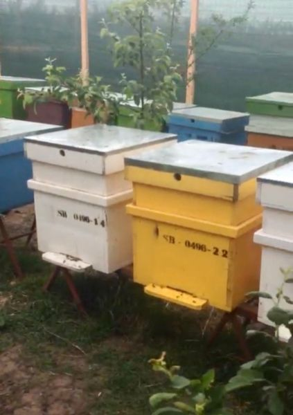 Vand stupina formata din 48 de familii de albine-5