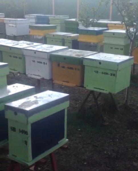 Vand stupina formata din 48 de familii de albine-6
