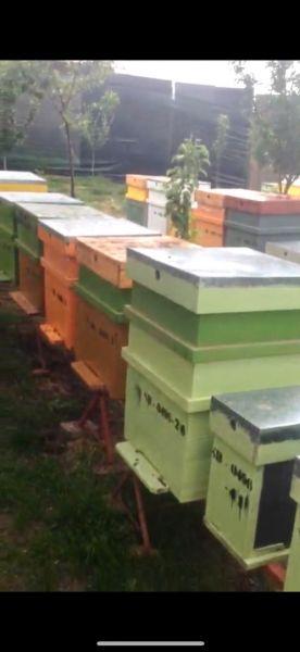 Vand stupina formata din 48 de familii de albine-9