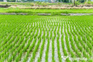 Vand teren agricol braila 340 ha-vand orezarie la braila 340 ha