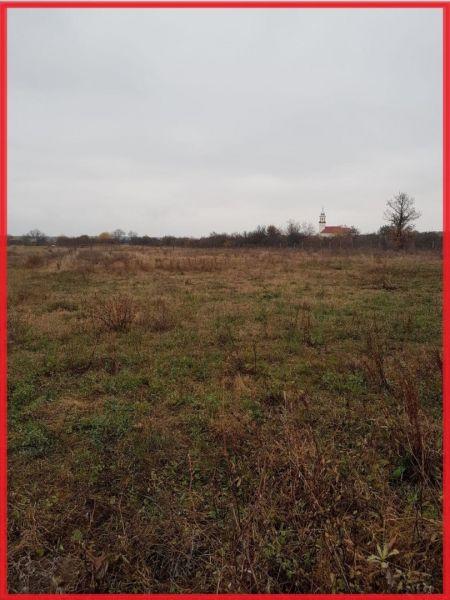 Vand urgent teren intravilan Sauaieu com.Nojorid 4251 m²-5